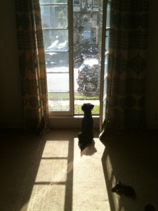 Baxter the watchdog