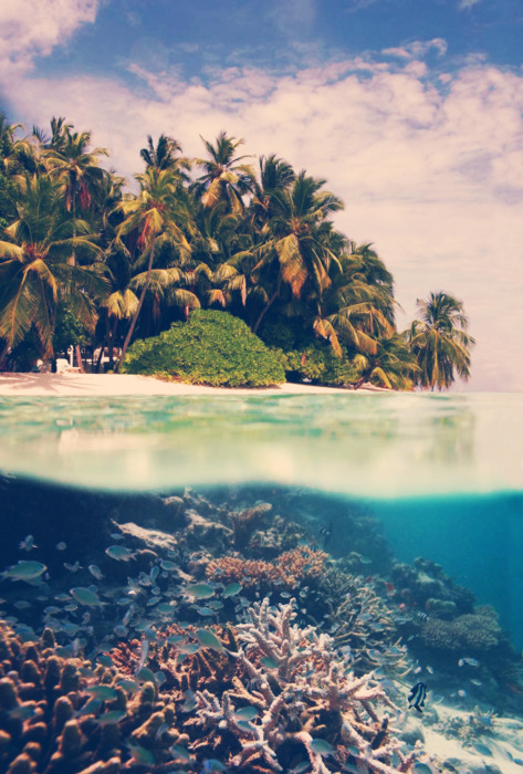 tropical life marine life image